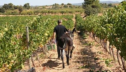 venta d'aubert wijn
